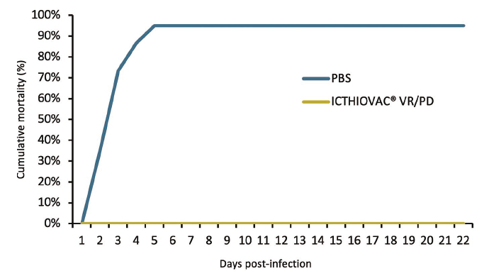 vaccines fish: Cumulative mortality (%) after challenge with Vibrio anguillarum O1.